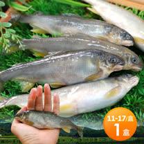【築地一番鮮】宜蘭帶卵小香魚1盒(13-14尾裝/1kg/盒)免運組