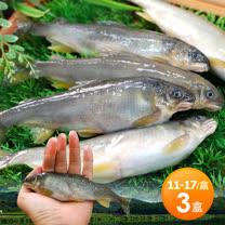 【築地一番鮮】宜蘭帶卵小香魚3盒(13-14尾裝/1kg/盒)免運組