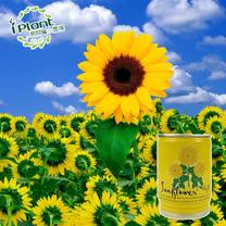 iPlant易開罐頭農場-向日葵