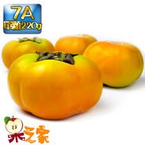 果之家 產地特選高山摩天嶺甜柿5台斤禮盒(7A,單顆6-7兩)