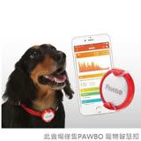 PAWBO 寵物智慧扣