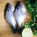 【好神】鮮凍優質肉魚(2尾/包)任選