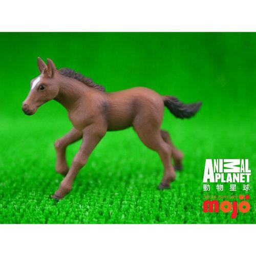 【MOJO FUN 動物模型】動物星球頻道獨家授權 - 小漢諾威種馬