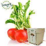 iPlant 積木小農場 - 櫻桃蘿蔔︱ 開心農場自家有
