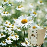 iPlant 積木小農場 -小品菊︱ 開心農場自家有