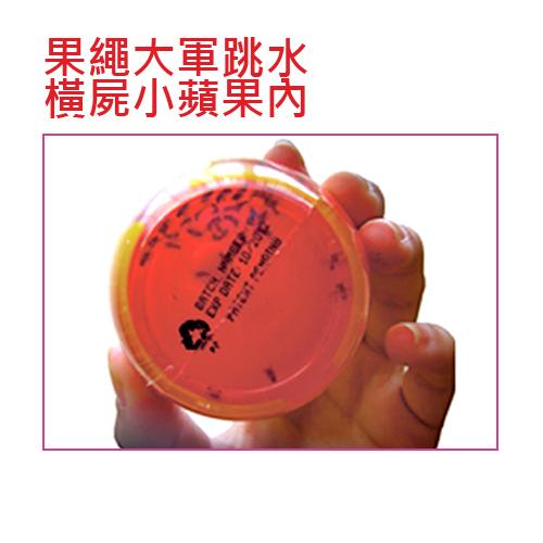 吸蠅力-果蠅誘引劑(12入/組)