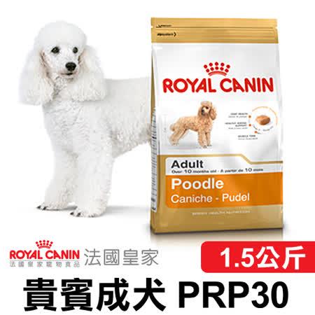 法國皇家  貴賓成犬1.5kg