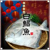 【築地一番鮮】野生一本釣白鯧魚2尾(約500g/尾)免運組