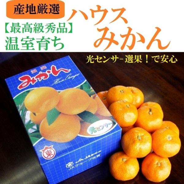 【果之蔬】日本西海蜜柑(原裝12入/約1.2kg±10%)