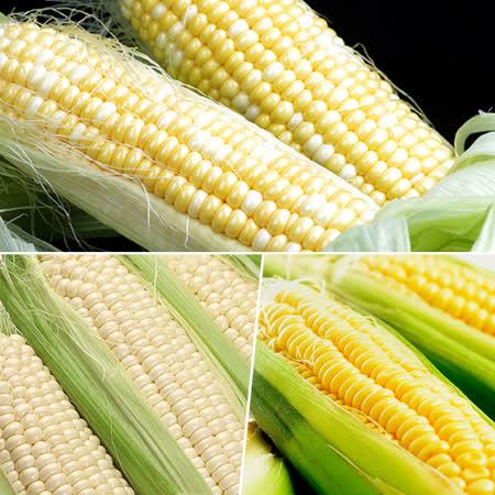 玉米家族 黃玉米+ 水果玉米+糯米玉米