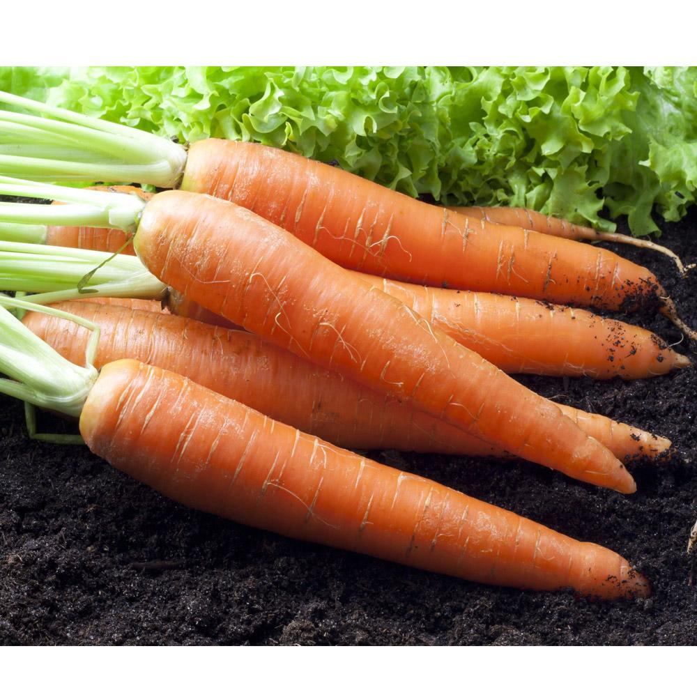 鮮採家 鮮採紅蘿蔔3台斤1箱