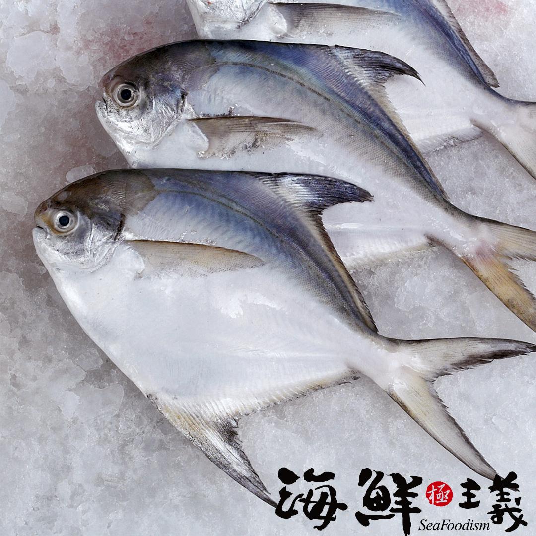 【海鮮主義】大白鯧魚 (500~600g/尾)