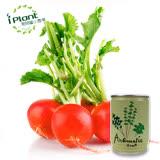 iPlant易開罐頭農場-櫻桃蘿蔔