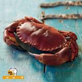 (任選)【極鮮配】英格蘭爆膏德文郡蟹(大) (900G±10%/隻)