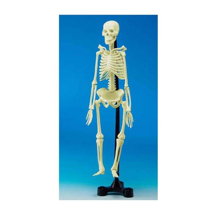 【華森葳兒童教玩具】科學教具系列-人體骨骼模型 N6-SK00046