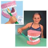 【華森葳兒童教玩具】科學教具系列-超大牙齒模型 N6-TH001