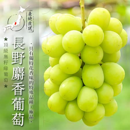 日本長野 頂級麝香葡萄