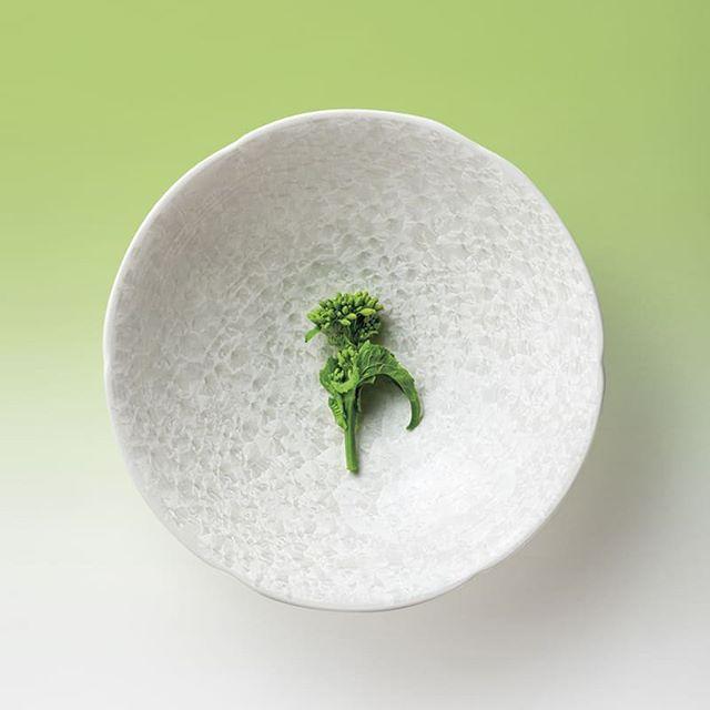 【日本橘吉 】白露盛缽(1入)--日本製