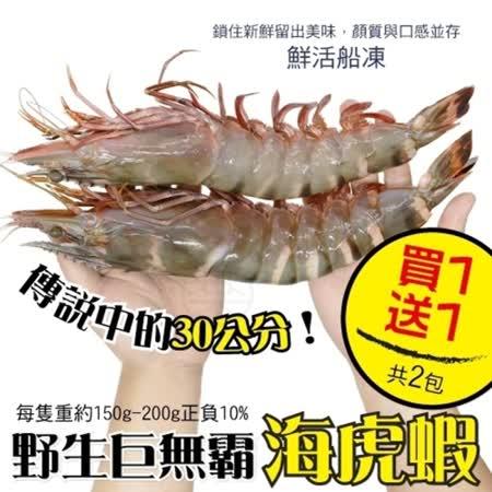 野生 巨無霸嚴選海虎蝦