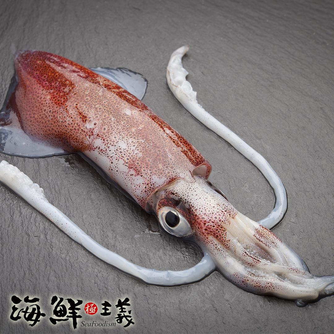 【海鮮主義】小卷(600g/包)