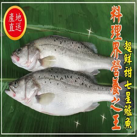 【海撰嚴選】 七星鱸魚400g