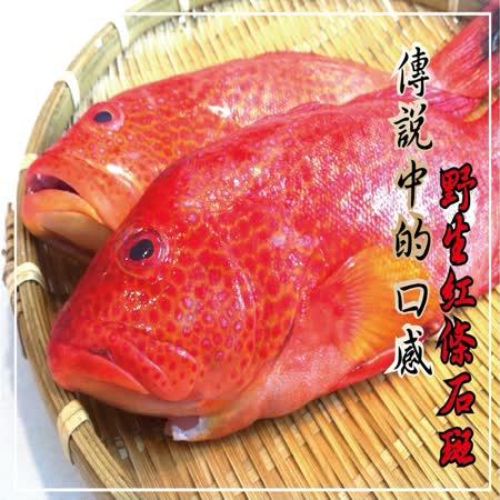 【海撰嚴選】 野生紅條石斑300g