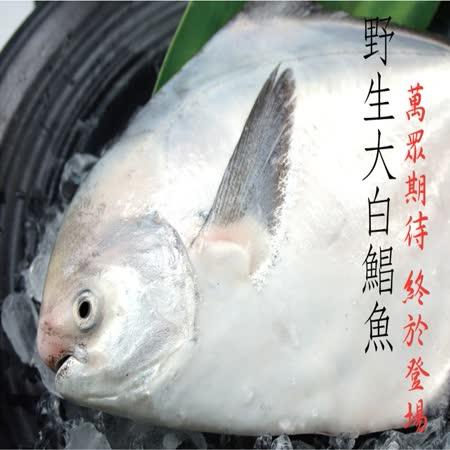 【海撰嚴選】 野生白鯧200g
