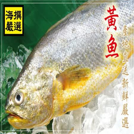 【海撰嚴選】 黃魚300g