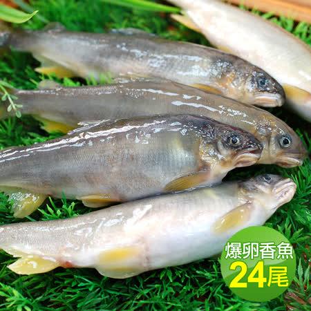 宜蘭大尺寸 爆卵香魚24尾