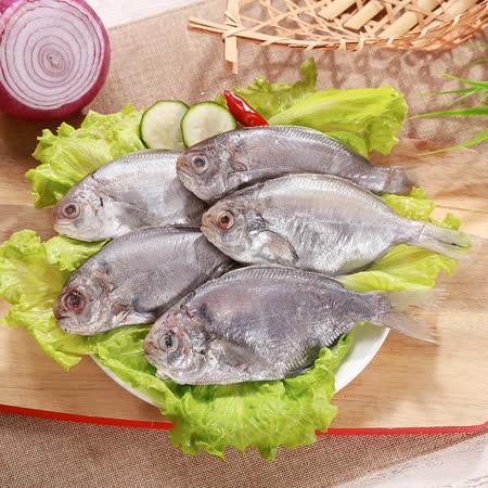 海之金 現撈肉魚/肉鯽仔24尾