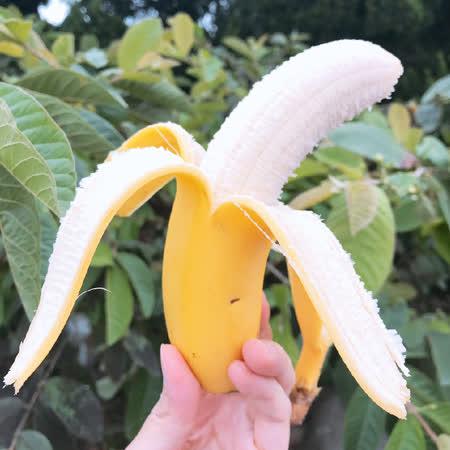 高雄旗山 頂級超Q香蕉禮盒8斤