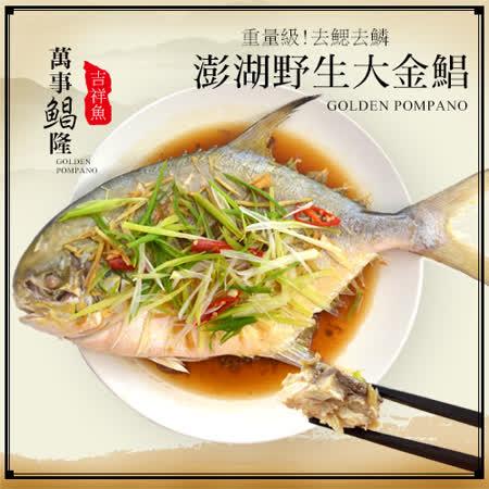 大口市集  野生超大金鯧魚650g