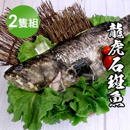 海鮮王 龍虎石斑魚2隻