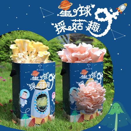 魔菇部落 星球採菇趣DIY種菇-4盒