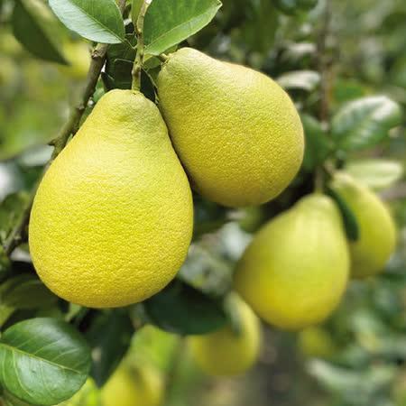 柚強生態農園 嚴選麻豆文旦3kg