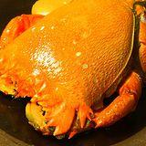 【幸福小胖】超大旭蟹 1隻(600g/隻)