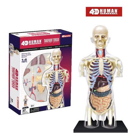 《4D MASTER》人體解剖教學系列 - 全透視人體(半身) 26068